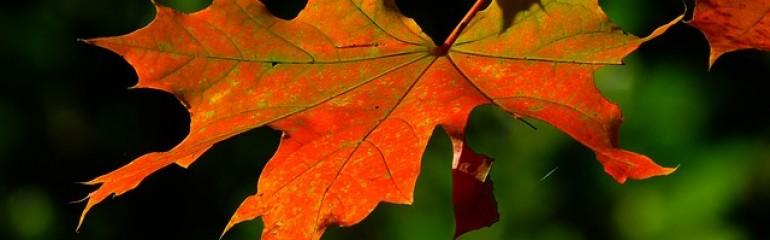 ¿Quieres dar la bienvenida al otoño en tu casa?